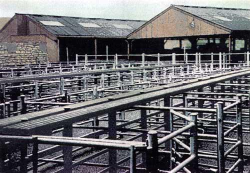 Wetherby-cattle-market